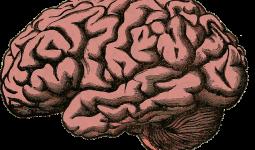 Hemorrhoids on the brain